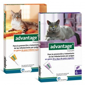 Advantage Gatos