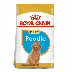 Royal Canin Poodle Puppy pienso para cachorro caniche