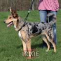 Easy Walk Basic de Trixie