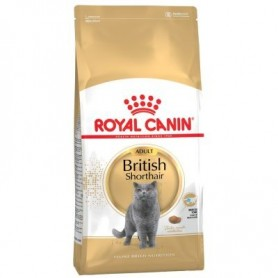 Royal Canin Razas British Shorthair 34