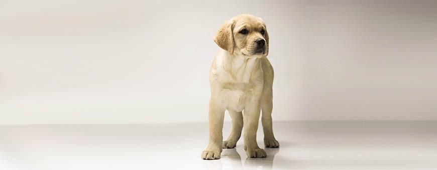 Pienso, alimentación y accesorios para perros