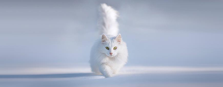 Pienso, alimentación y accesorios para gatos