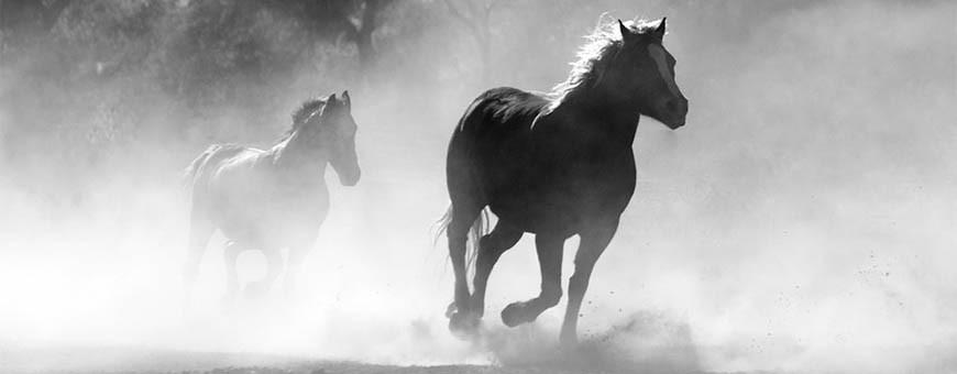 Pienso, alimentación y accesorios para caballos
